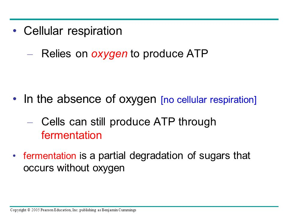 In the absence of oxygen [no cellular respiration]